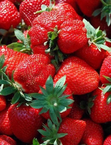 3 recetas fáciles para aprovechar la temporada de fresas